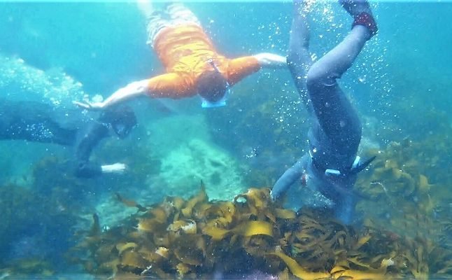【Ama tour】Diving with Ama diver in Ise-shima and Seafood BBQ lunch