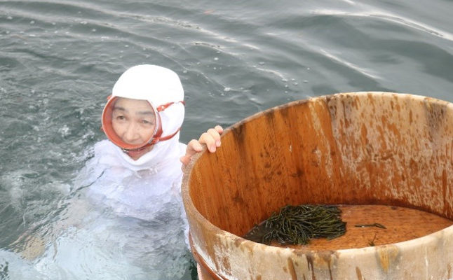 【Ama tour】Watch Ama diver's traditional work from a boat