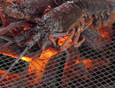 Taste a lobster fresh from the sea!: Roast a whole lobster over fire. Enjoy tender and soft lobster.