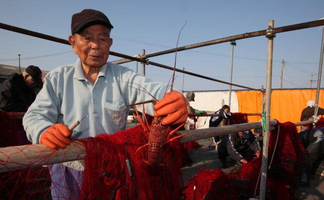 【漁師ツアー】伊勢えび漁の網さばき見学(まるごと一尾試食+2尾お土産付)