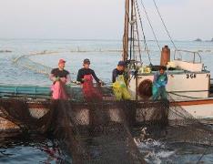 早朝4時頃、波切漁港を出発。大敷網漁を間近で見学します。