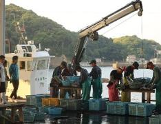 獲れたての魚を漁師さんが仕分けする姿がみられます。